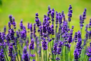 homeopathie-sante